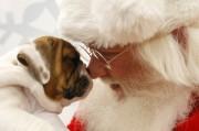 PetSmart Santa Claws