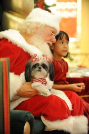 US-CHRISTMAS-PETS