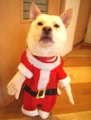 blog.pdc.shop-pro.jp_images_20071025004