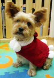 blog.pdc.shop-pro.jp_images_20081103001