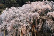 春の花の画像集まとめ