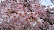 春,花,画像集,まとめ