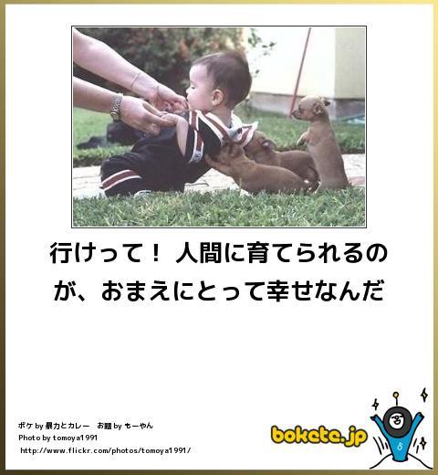 bokete(ボケて!)おもしろ画像集203