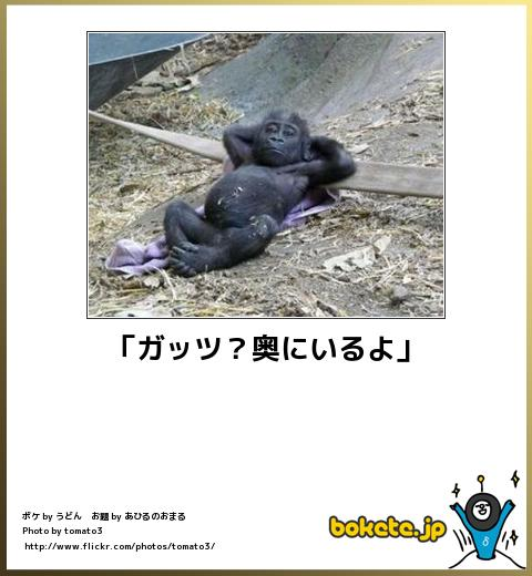 bokete(ボケて!)おもしろ画像集204