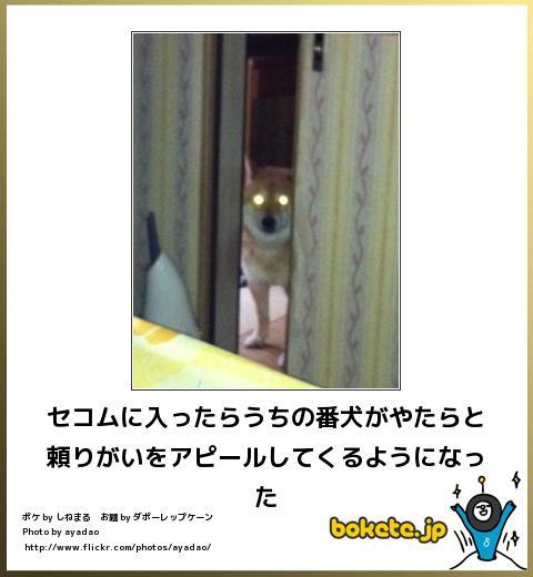 bokete(ボケて!)おもしろ画像集213
