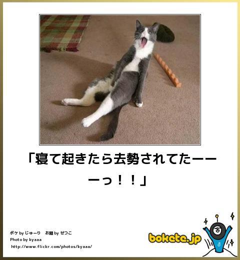 bokete(ボケて!)おもしろ画像集223
