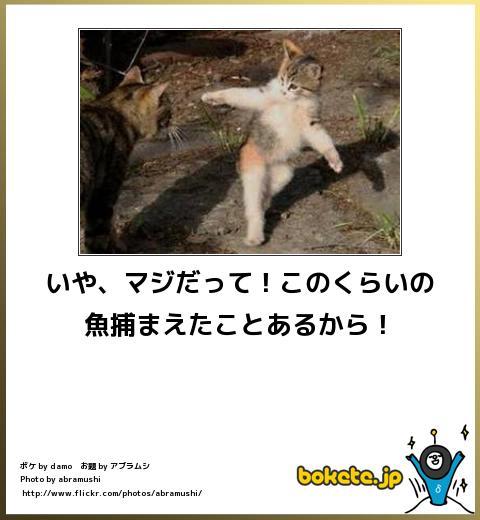 bokete(ボケて!)おもしろ画像集224