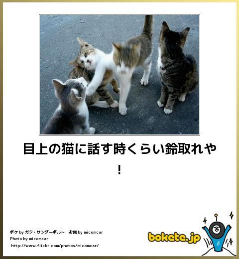 bokete(ボケて!)おもしろ画像集242