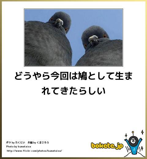 bokete(ボケて!)おもしろ画像集245