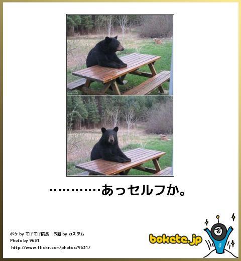bokete(ボケて!)おもしろ画像集246
