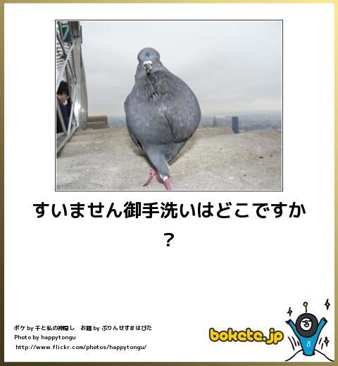 bokete(ボケて!)おもしろ画像集254