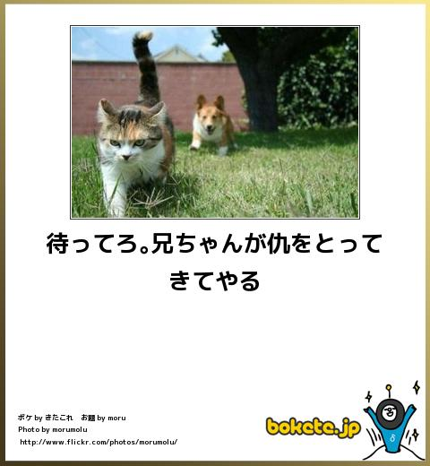 bokete(ボケて!)おもしろ画像集266