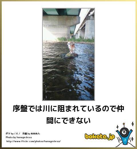 bokete(ボケて!)おもしろ画像集268