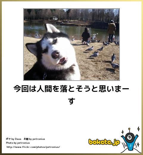 bokete(ボケて!)おもしろ画像集269