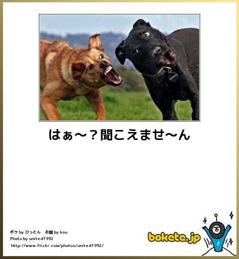 bokete(ボケて!)おもしろ画像集270