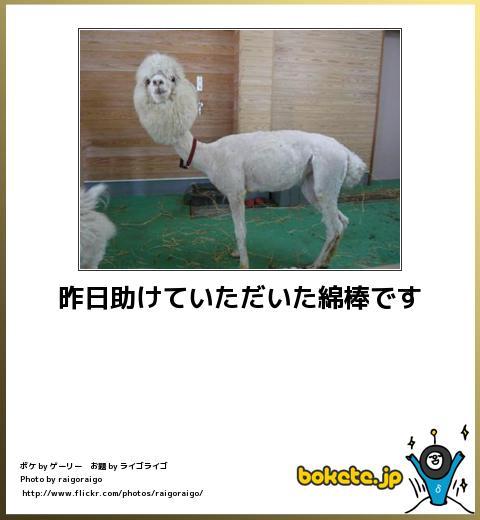 bokete(ボケて!)おもしろ画像集273
