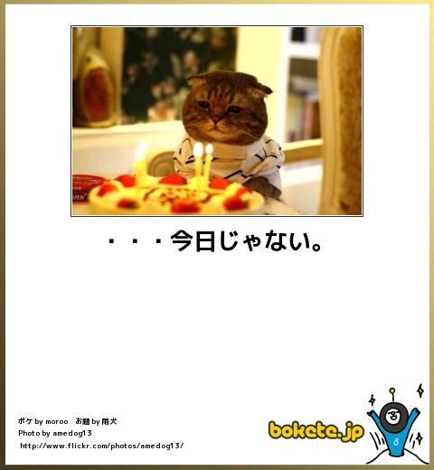 bokete(ボケて!)おもしろ画像集291