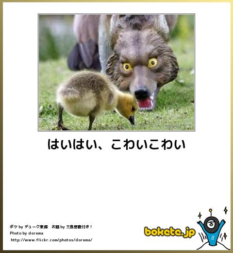 bokete(ボケて!)おもしろ画像集292