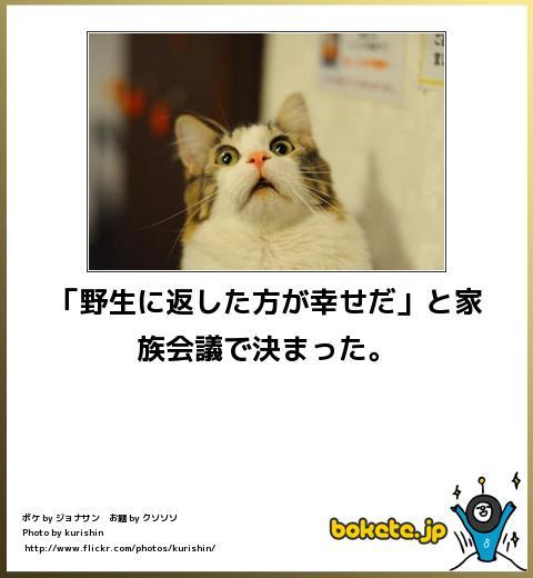 bokete(ボケて!)おもしろ画像集293