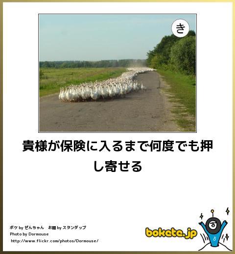 bokete(ボケて!)おもしろ画像集301