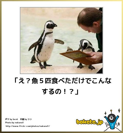 bokete(ボケて!)おもしろ画像集305
