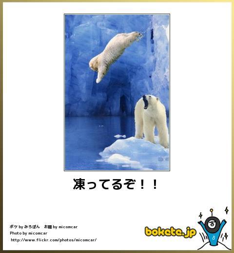 bokete(ボケて!)おもしろ画像集317