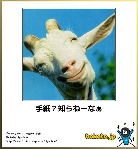 bokete(ボケて!)おもしろ画像集323