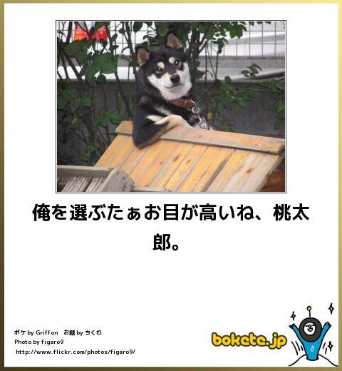bokete(ボケて!)おもしろ画像集326