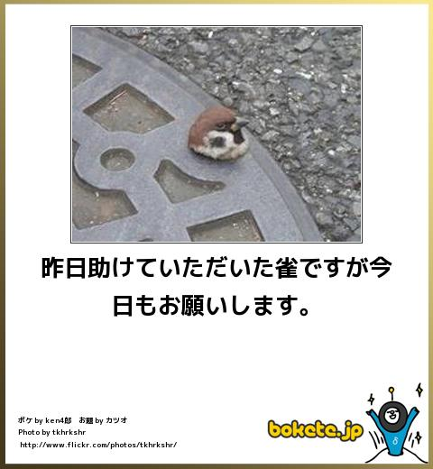 bokete(ボケて!)おもしろ画像集328