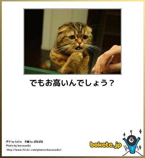 bokete(ボケて!)おもしろ画像集329