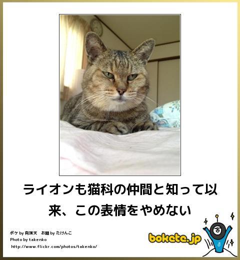 bokete(ボケて!)おもしろ画像集335