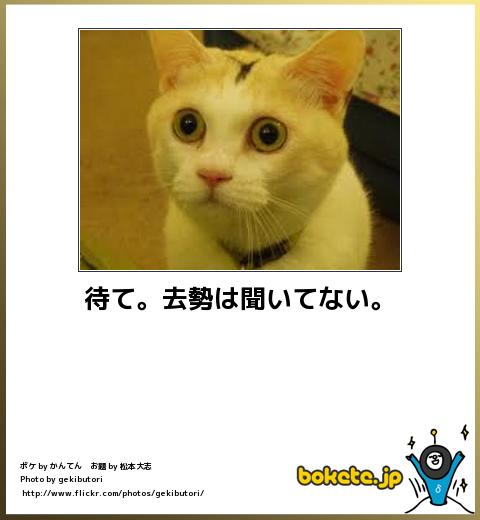 bokete(ボケて!)おもしろ画像集343