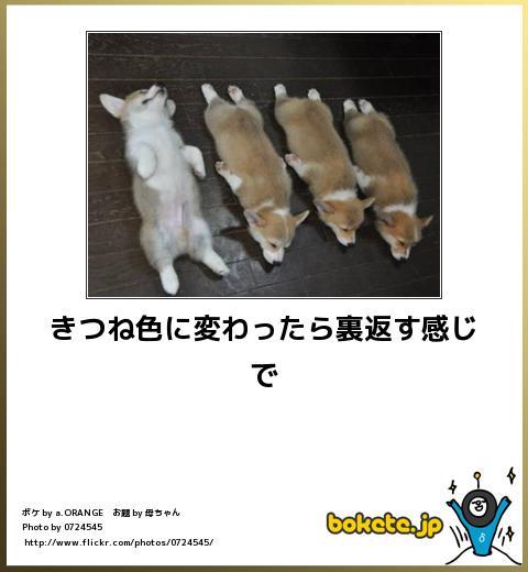 bokete(ボケて!)おもしろ画像集369