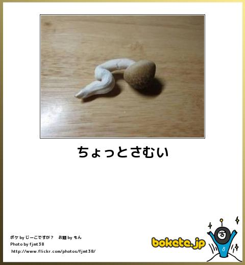 bokete(ボケて!)おもしろ画像集371