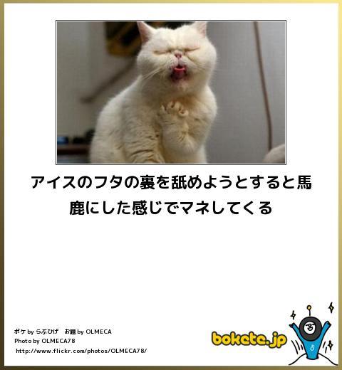 bokete(ボケて!)おもしろ画像集397