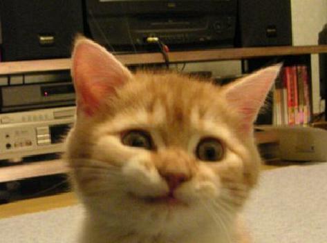 猫のおもしろ画像