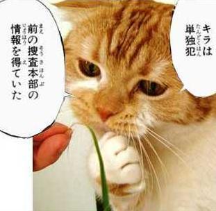 猫おもしろ10