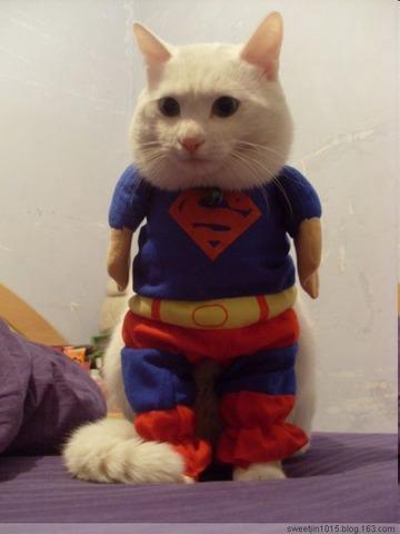 猫おもしろ102