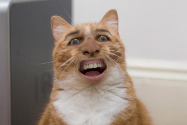 猫おもしろ11