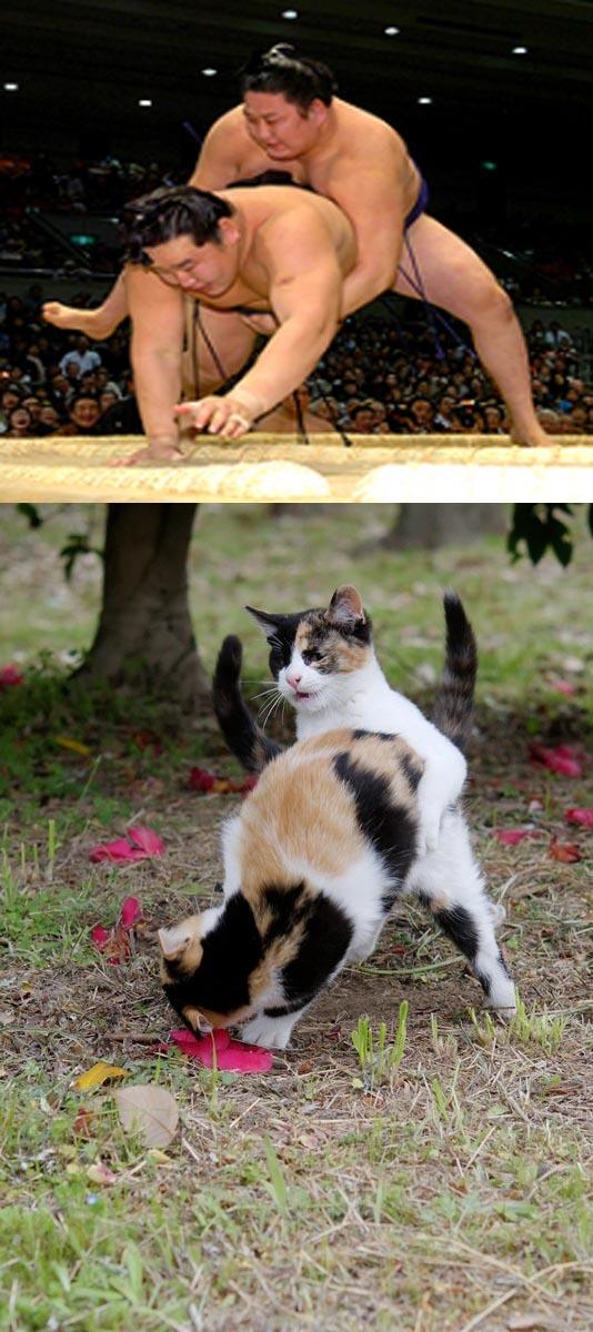 猫おもしろ110