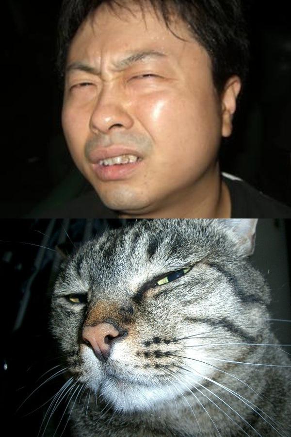 猫おもしろ112