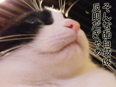 猫おもしろ113