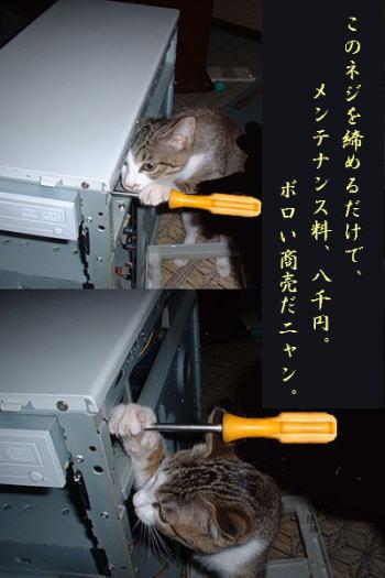 猫おもしろ116