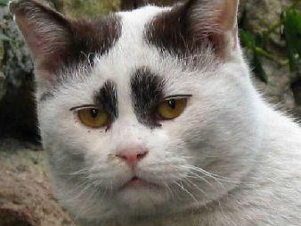 猫おもしろ119