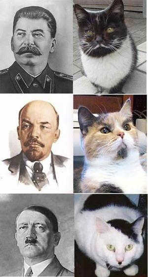 猫おもしろ122