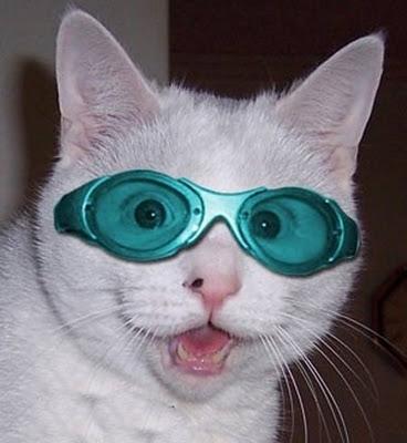 猫おもしろ21