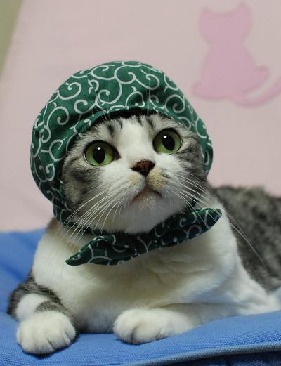 猫おもしろ23