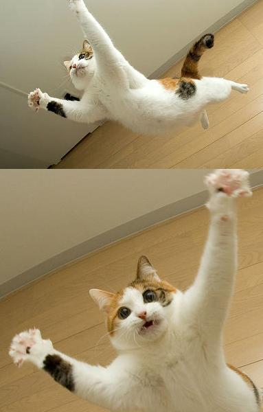 猫おもしろ24