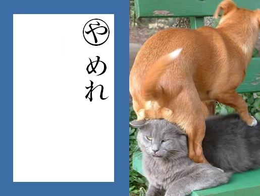 猫おもしろ34
