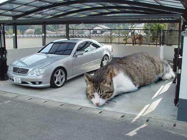 猫おもしろ35